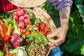 Почему дохнут кролики: причины гибели