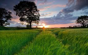 Сроки посадки овощных культур в открытый грунт