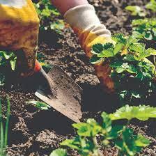 Вкус и цвет эспарцетового меда
