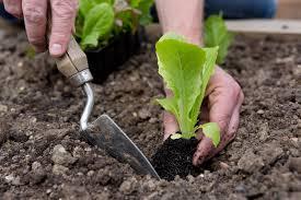 Розы лучший сорт